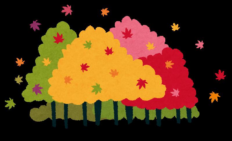 香嵐渓の紅葉17見頃やライトアップの時間と期間は 屋台情報も かっぱぺんぎん帳